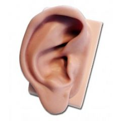 Silicone Ear Model for Practising (Right)