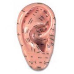 Zone Ear Auricular Acupoint Model 17cm