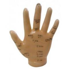 Human Hand Model